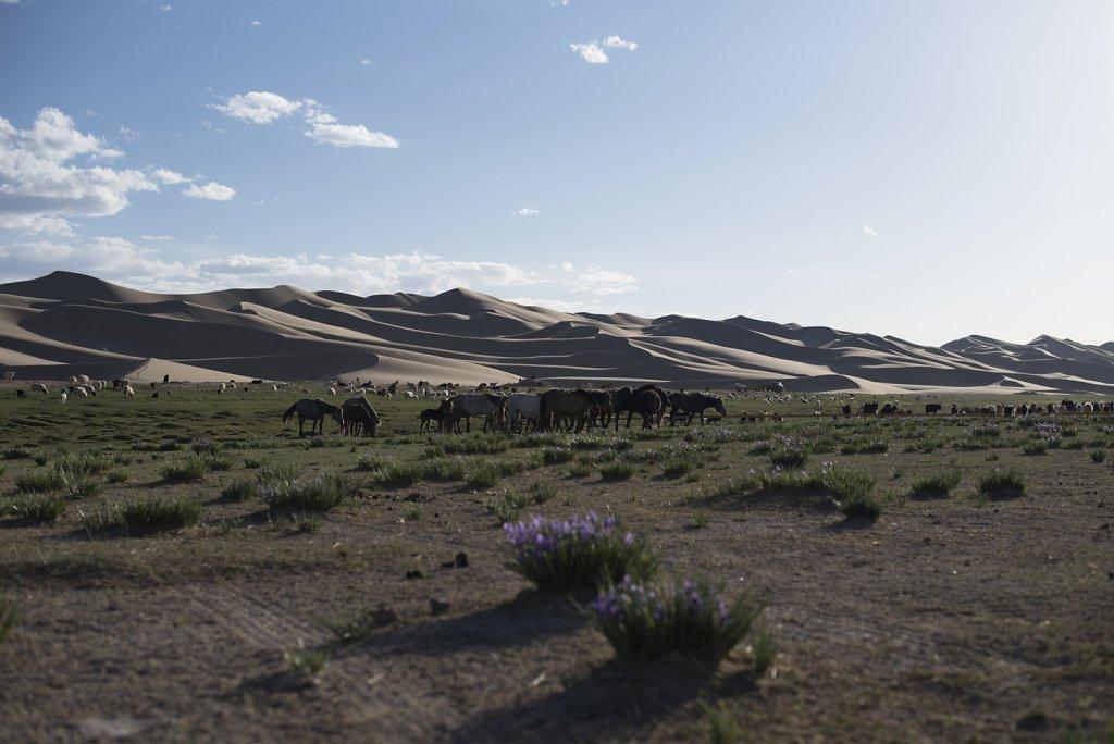 Omnogovi / Mongolia