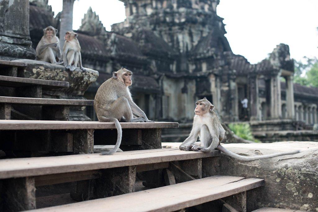 AngkorWat-3.jpg